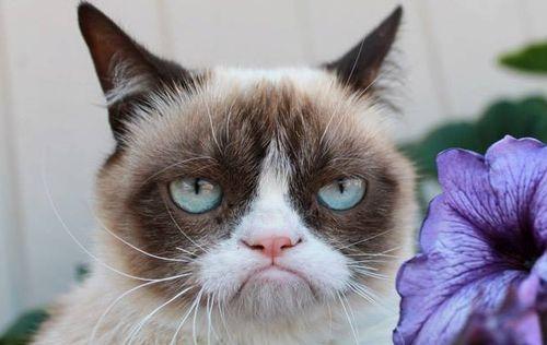 grumpy-cat-und-eine-blume